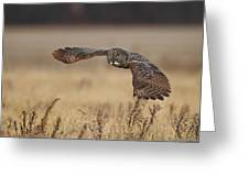 Great Grey  Greeting Card