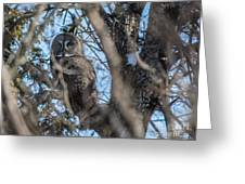 Great Grey In The Woods Greeting Card