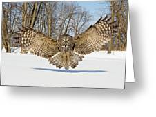 Great Grey Owl Attack Greeting Card