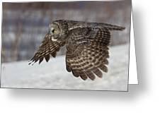 Great Grey Owl In Flight Greeting Card by Jakub Sisak