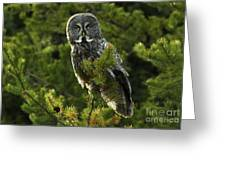 Great Grey Owl On The Hunt Greeting Card