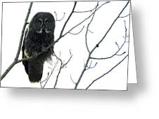 Great Grey Owl On The Lookout Greeting Card