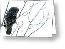 Great Grey Owl On Watch Greeting Card