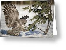 Great Grey Owl Pictures 23 Greeting Card