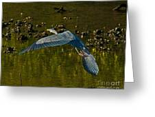 Great Heron Over Oyster Beds Greeting Card