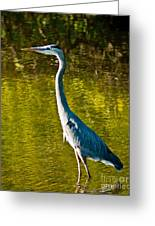 Great Heron Greeting Card