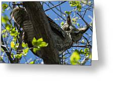 Great Horned Owl 5 Greeting Card