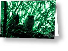 Great Horned Owl And Owlet Greeting Card