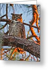 Great Horned Owl At Sunset Greeting Card