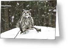 Great Horned Owl In A Winter Snow Storm Greeting Card