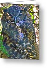 Great Horned Owl In Salmonier Nature Park-nl Greeting Card