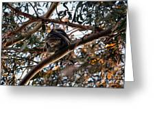 Great Horned Owl Looking Down  Greeting Card