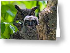 Great Horned Owl Nesting Greeting Card