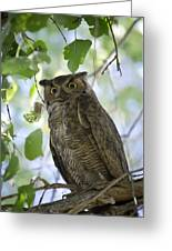 Great Horned Owl On A Branch  Greeting Card