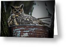 Great Horned Owl On Nest Greeting Card