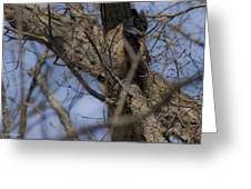 Great Horned Owl On Watch Greeting Card