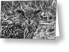 Great Horned Owl V7 Greeting Card