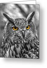 Great Horned Owl V9 Greeting Card