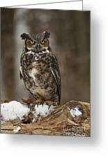 Great Horned Owl Watching You Greeting Card by Inspired Nature Photography Fine Art Photography