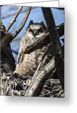 Great Horned Owlet Finishes Lunch Greeting Card