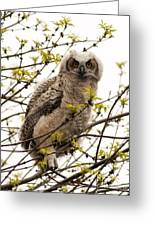 Great Horned Owlet Greeting Card