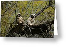 Great Horned Owlets 1 Greeting Card