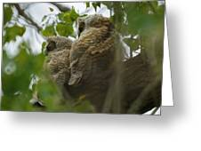Great Horned Owlets 5 20 2011 Greeting Card