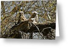 Great Horned Owlets Photo Greeting Card