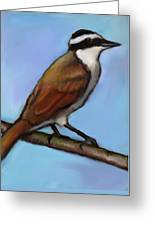 Great Kiskadee Bird Greeting Card