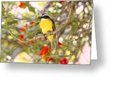 Great Kiskadee On A Branch Greeting Card