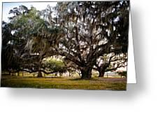 Great Live Oak Greeting Card