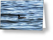 Great Northern Loon Greeting Card