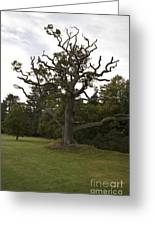 Great Oaks From Little Acorns Grow Greeting Card