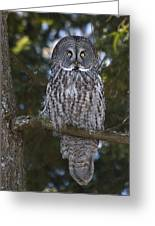 Great Owl Eyes Greeting Card