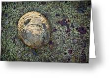 Great Owl Limpet Greeting Card