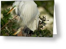 Great Egret Takes A Stance Greeting Card