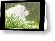 Great Pyrenees Dog In Grass Animal Pets Canine Art Greeting Card
