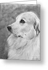 Great Pyrenees In Profile Drawing Greeting Card