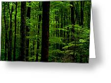 Great Smoky Mountains Forest Greeting Card