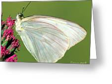 Great Southern White Butterfly Greeting Card