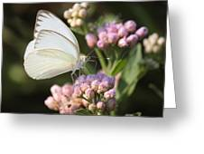 Great Southern White Butterfly On Pink Flowers Greeting Card