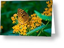 Great Spangled Fritillarie Ins 77 Greeting Card