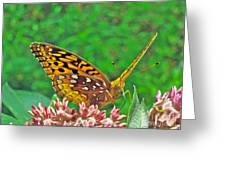 Great Spangled Fritillary Butterfly - Speyeria Cybele Greeting Card
