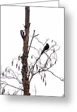 Great Spotted Woodpecker And A Blackbird. Dude What Are You Doing Greeting Card