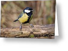 Great Tit On A Log Greeting Card by Paul Gulliver