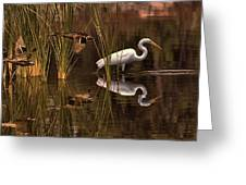 Great White Egret And Mallard Flight Sunrise Reflection Greeting Card
