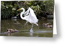 Great White Egret And Turtle Friends1 Greeting Card