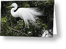Great White Egret Building A Nest Vii Greeting Card