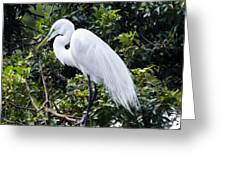 Great White Egret Building A Nest Viii Greeting Card