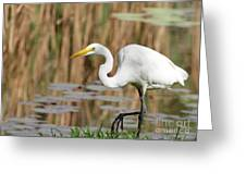 Great White Egret By The River Greeting Card by Sabrina L Ryan